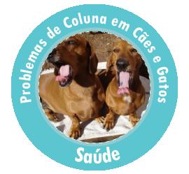 Destaque - Problemas de coluna em Cães e Gatos