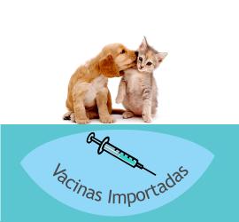 Vacinação de Cães e Gatos em Domicílio feito pela Clínica Veterinária PreVet Home