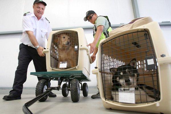 Transporte aéreo de animais