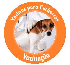 Destaque - Vacinas para Cachorro