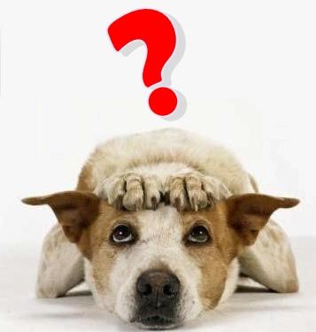 Cachorro-Preocupado.jpg