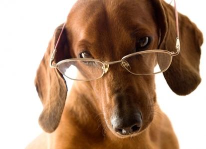 Cães têm a visão mais limitada do que humanos