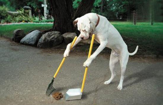 Cães são facilmente adestrados
