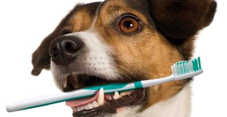 Cão escovando os dentes. Prevenção de tártaros.