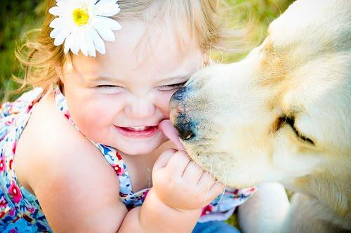 Vacinação de Cães e Gatos em Domicílio