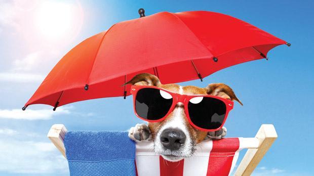 O seu cão curtindo uma praia...