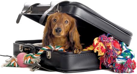 Prepare a bagagem do seu cão e pé na estrada!