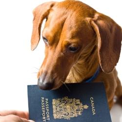 Passaporte Cães e Gatos, providencie o seu com a Clínica Veterinária PreVet Home.