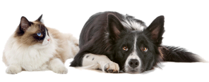 Vacinação de Cães e Gatos em Domicílio.